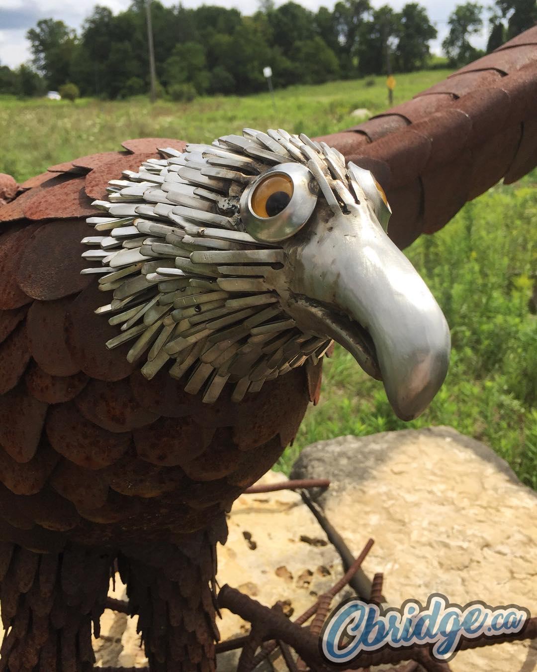 Eleanor The Eagle #mycbridge #cbridge