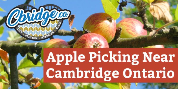 Apple Picking Near Cambridge Ontario