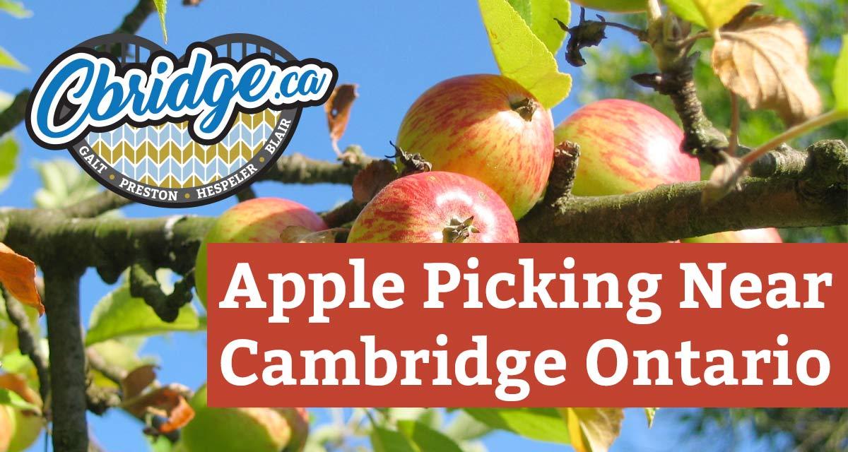 Apple Picking Near Cambridge Ontario
